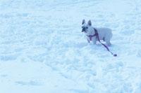 関東積雪20cm以上